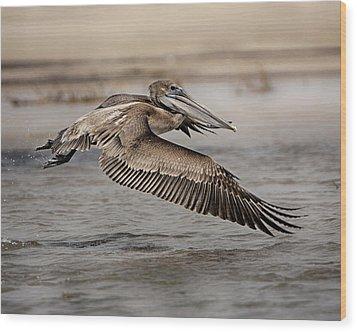 Pelican In The Air Wood Print