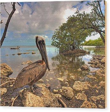Pelican In The Florida Keys Wood Print