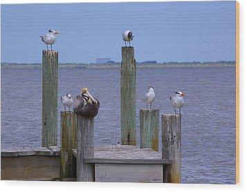 Pelican Incognito Wood Print