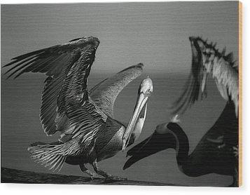 Pelican Wood Print
