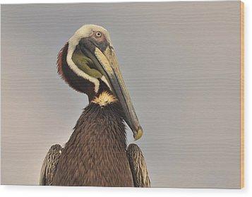 Pelican  Wood Print by Nancy Landry