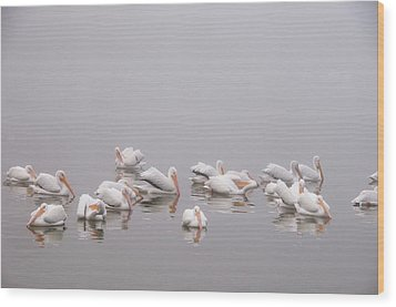 Pelicans On The Lake Wood Print by Carolyn Dalessandro