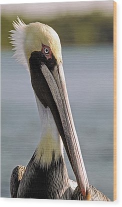 Wood Print featuring the photograph Pelican Portrait by Sally Weigand