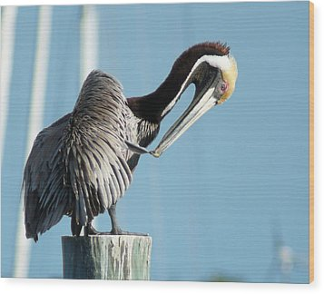 Wood Print featuring the photograph Pelican Preen by Lynda Dawson-Youngclaus