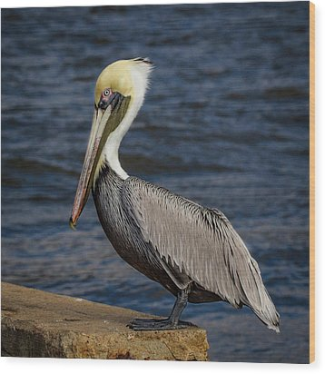 Pelican Profile 2 Wood Print by Jean Noren