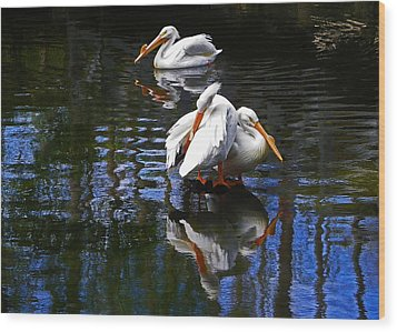 Pelican Reflections Wood Print
