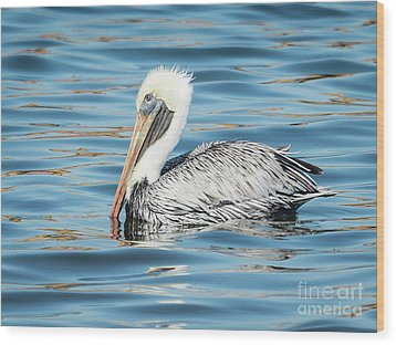 Pelican Relaxing Wood Print by Scott and Dixie Wiley
