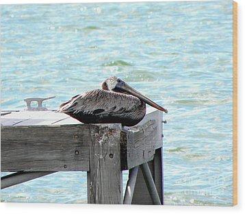 Pelican Resting Wood Print by Terri Mills