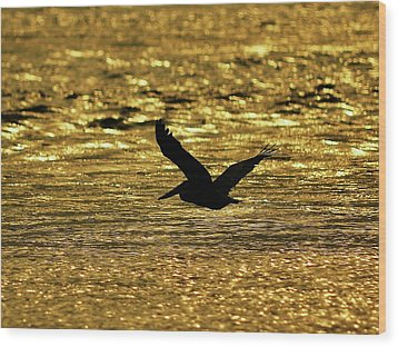 Pelican Silhouette - Golden Gulf Wood Print by Al Powell Photography USA