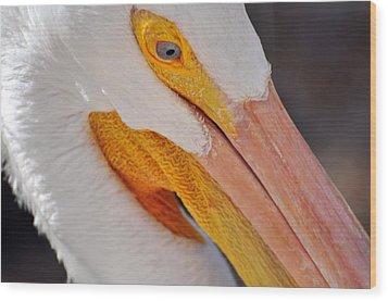 Pelican Twist Wood Print by Marty Koch