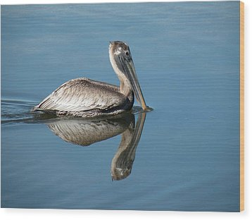 Pelican With Reflection Wood Print by Rosalie Scanlon