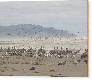 Pelicans And Gulls Wood Print by Pamela Patch