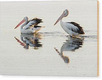 Pelicans At Dusk Wood Print by Werner Padarin