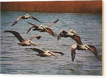 Pelicans Flying Through The Marsh Wood Print by Paulette Thomas