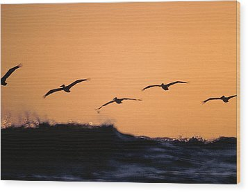 Pelicans Over The Pacific Wood Print by Michael Mogensen