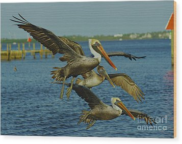 Pelicans Three Amigos Wood Print
