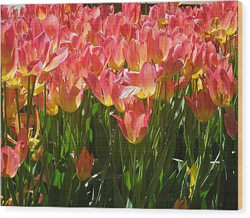 Pella Tulips Yellow Pink Wood Print by Peg Toliver