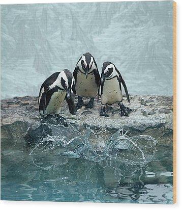 Penguins Wood Print by Fotografias de Rodolfo Velasco