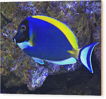 Blue Tang Fish  Wood Print by Kathy M Krause