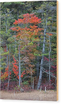 Pennsylvania Laurel Highlands Autumn Wood Print by John Stephens