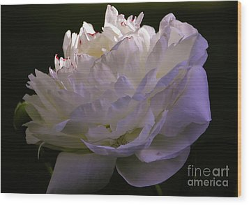 Peony At Eventide Wood Print by Marilyn Carlyle Greiner