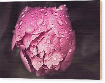 Peony In The Rain Wood Print