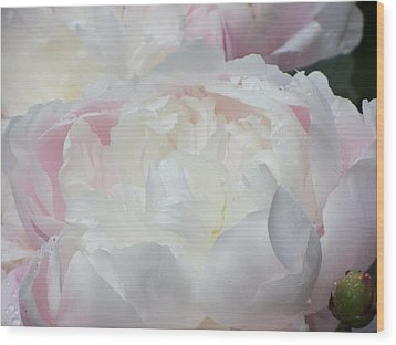 Peony Wood Print by Karen Shackles