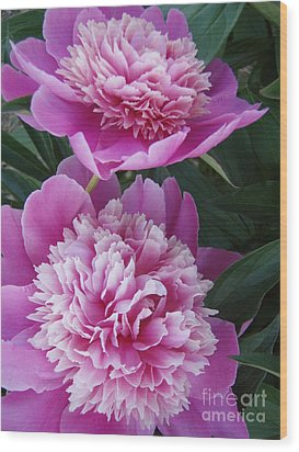 Wood Print featuring the photograph Peony by Kristine Nora
