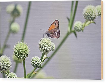 Perched Butterfly No. 255-1 Wood Print by Sandy Taylor