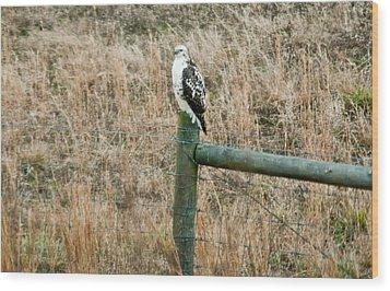Perched Hawk Wood Print by Douglas Barnett