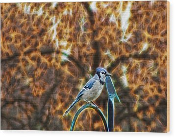 Wood Print featuring the photograph Perched Jay by Cameron Wood