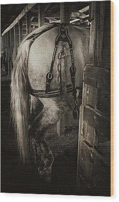 Percheron Draft Horse Wood Print by Theresa Tahara