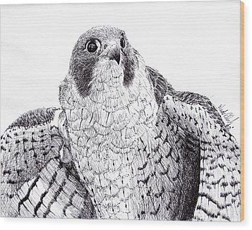 Peregrine Falcon Wood Print by Wade Clark