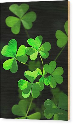 Perfect Green Shamrock Clovers Wood Print