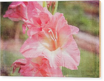 Perfect Pink Canna Lily Wood Print by Toni Hopper