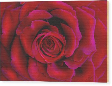 Perfect Rose Wood Print