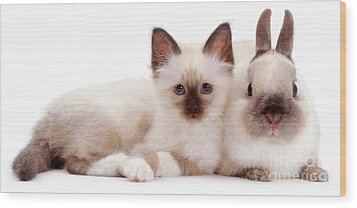 Perfectly Paired Pals Wood Print