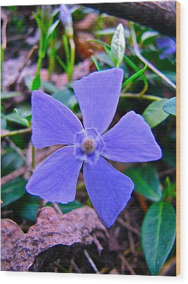 Wood Print featuring the photograph Periwinkle Flower by Lori Miller