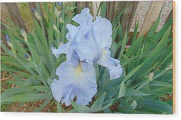 Periwinkle Iris  Wood Print