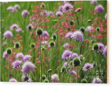 Perky Chives Wood Print