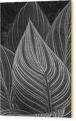 Perpetual Motion Wood Print