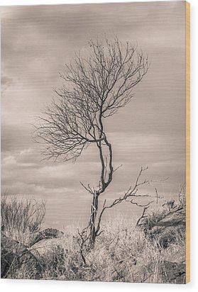 Perseverance Wood Print by Racheal Christian