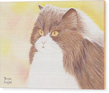 Persian Kitty Wood Print by Brenda Bonfield