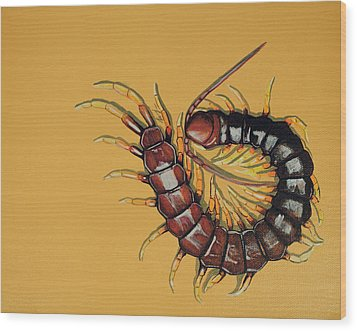 Wood Print featuring the painting Peruvian Centipede by Jude Labuszewski