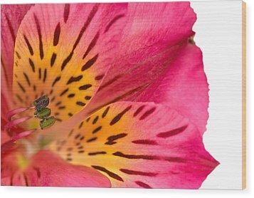 Peruvian Lily Macro Wood Print