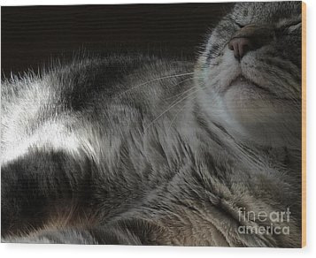 Pet Portrait - Lily Three Wood Print by Laura Wong-Rose