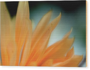 Wood Print featuring the photograph Petal Disaray by Greg Nyquist
