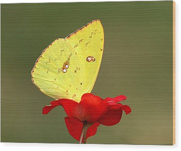 Wood Print featuring the photograph Petals And Wings by Sheila Brown