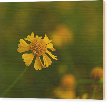 Petals Of Nature Wood Print by Christopher L Thomley