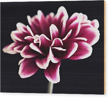 Petals Of The Mum Wood Print by Cathie Tyler
